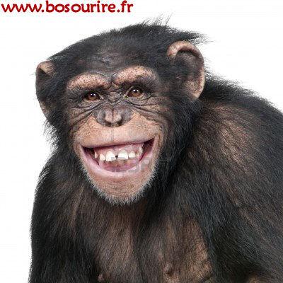 4934512-jeunes-chimpanzes-troglodytes-simia-6-ans-devant-un-fond-blanc.jpg